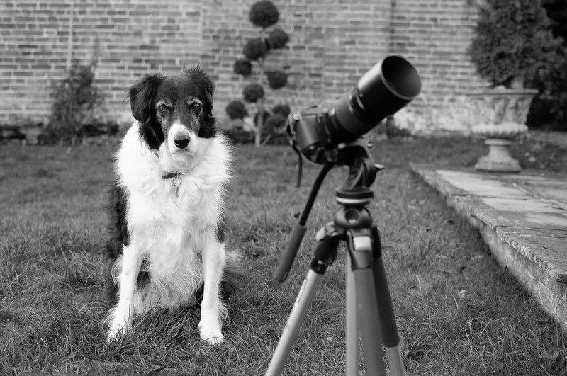 The black and white photographer