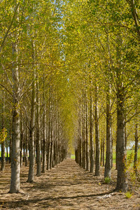 Grove of trees in the Palouse
