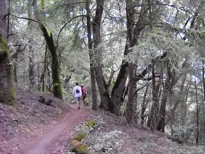 Stevens Creek 50K (9/13/09)