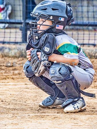 2019 Baseball & Softball