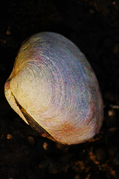A colorful clamshell