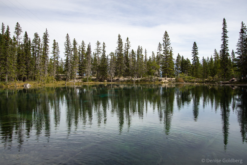 reflecting trees, Grassi Lakes