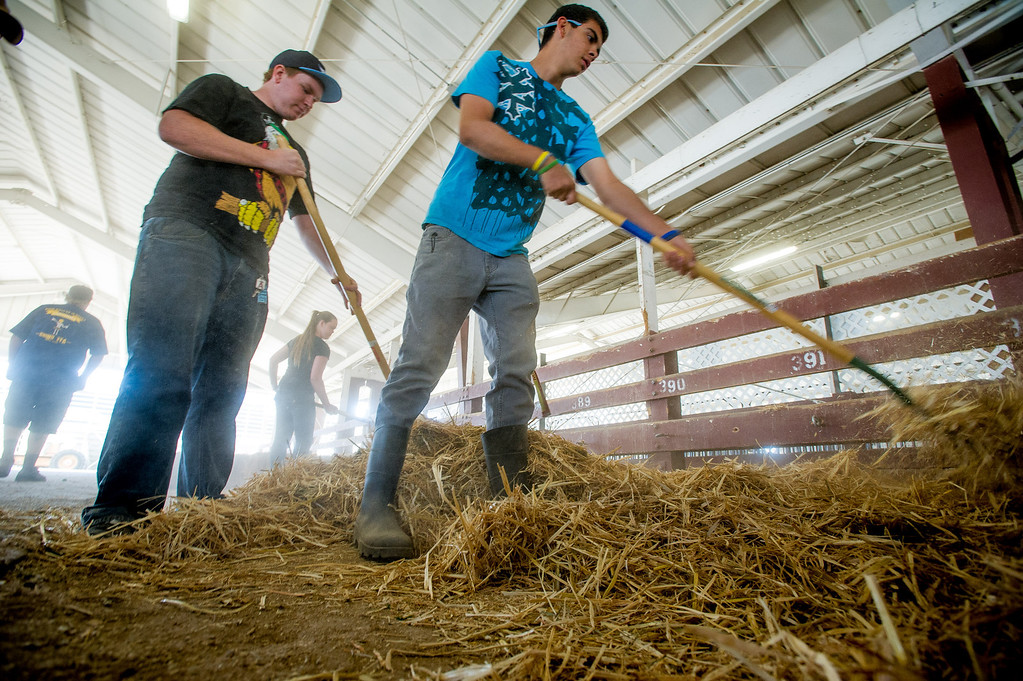 . Tim Creager, left, of Chino FFA, Danielle Butler of Chino FFA and John Kane of Monte Vista Diamonds 4H Club fork hay into stalls as preparations are made for opening day of the San Bernardino County Fair in Victorville, Friday,  May 24 2013. (Eric Reed/The Sun)