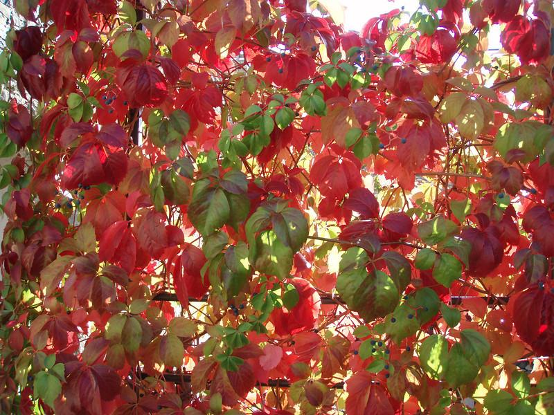 2006_10_05-08_58_50.jpg