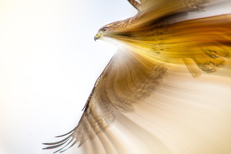 hawk twirl 2 (1 of 1).jpg
