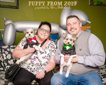 Puppy Prom Portaits