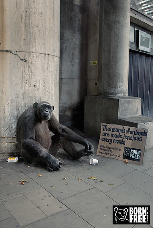 Homeless Animals Campaign