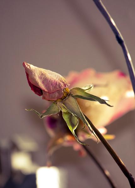 KoRedfield-Floral68.jpg