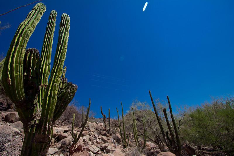 Loreto cactus.jpg