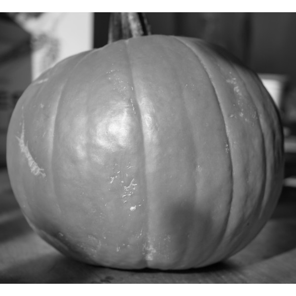 pumpkin bright bw.jpg