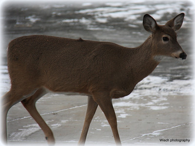 Wildlife Winter 2012-2013