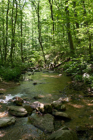 Tuscarora Creek and Frederick Municipal Forest May 20, 2012