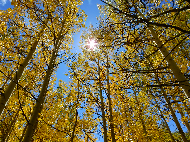 CO Fall Trip 2018 (121).JPG