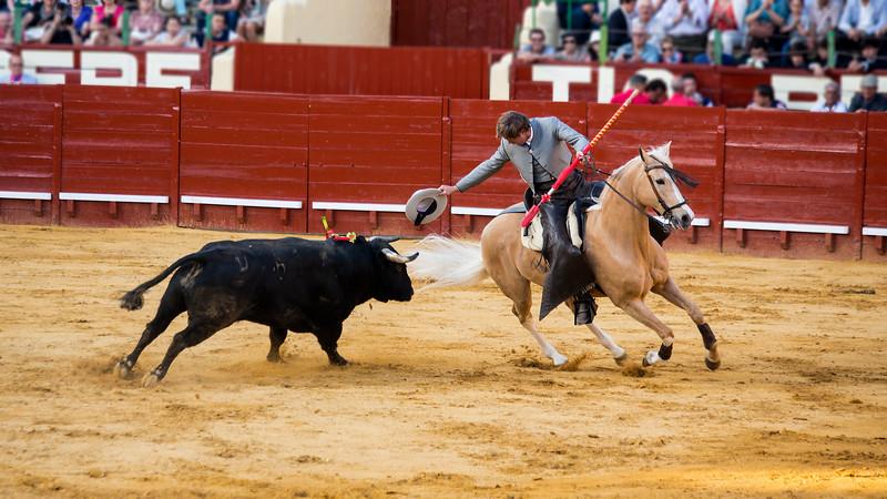 Bullfighting H35.jpg
