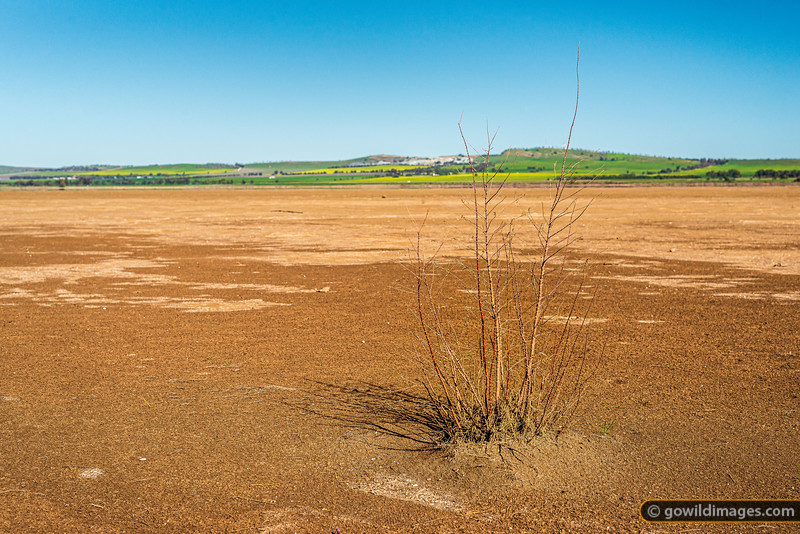 Lake Cooper Drought