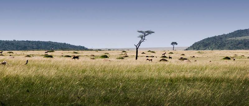 mara-landcape.jpg