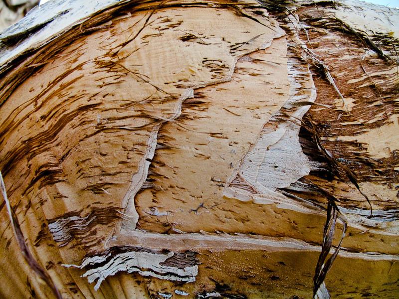 February 1 - Tree