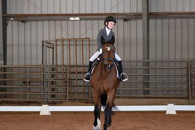 Horse 114