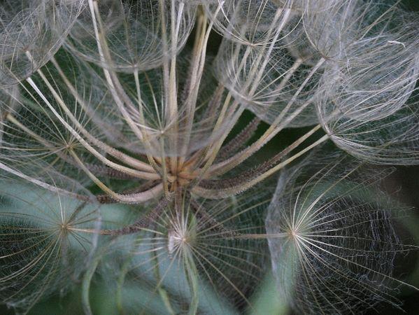 sundayflora821.jpg
