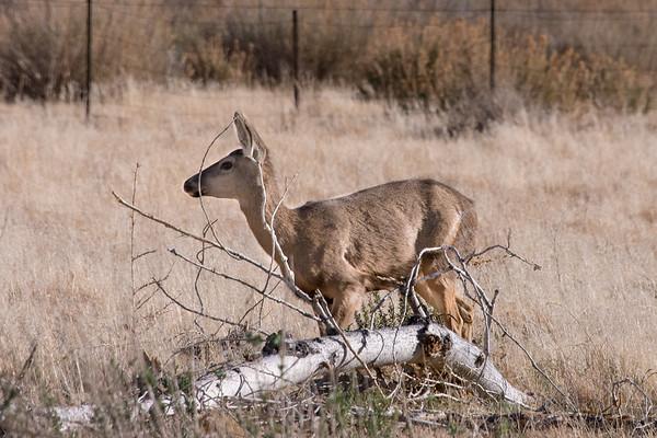 Big Morongo Canyon Preserve March 17, 2018