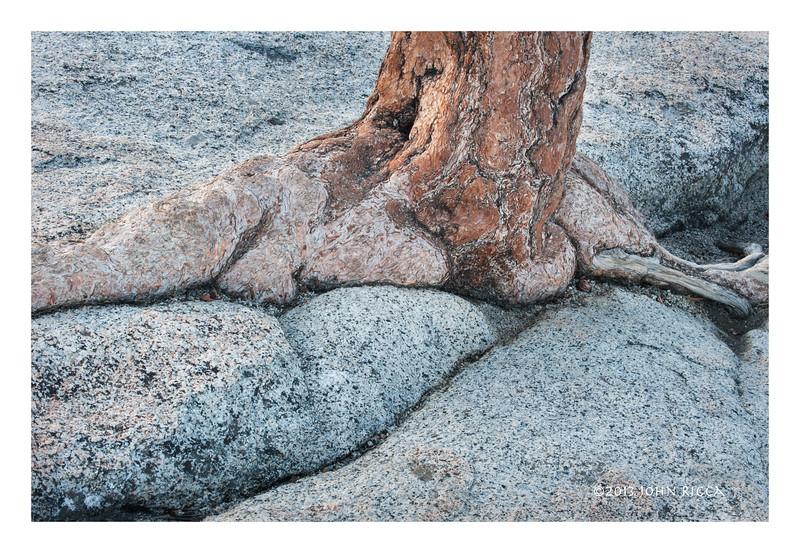 Tree And Granite, High Sierras.jpg