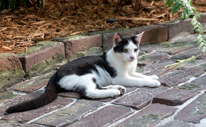 Florida-Keys-Key-West-Hemingway-Home-Cats-16.jpg