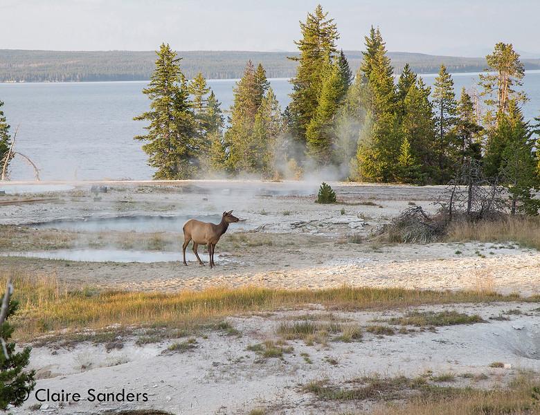 2017 0731 Yellowstone-2a_MDC.jpg