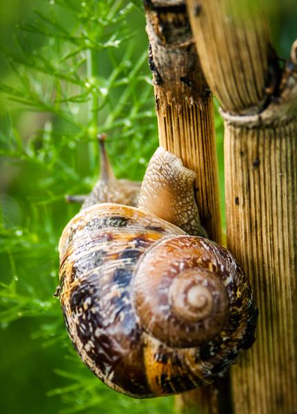 Snail, Campbell, California, 2005