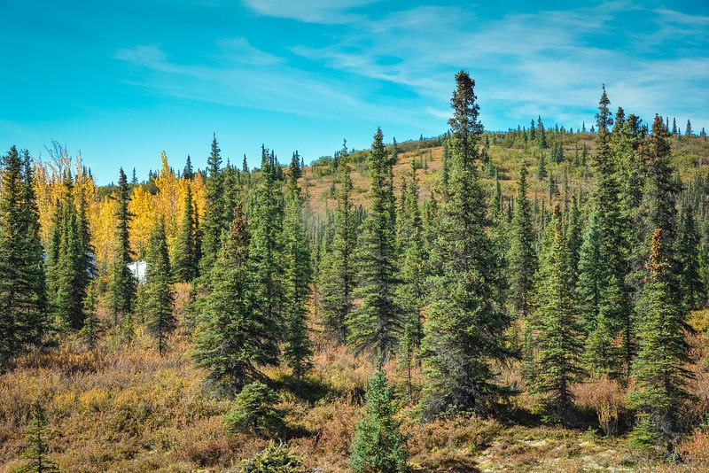 Denali-National-Park-125.jpg