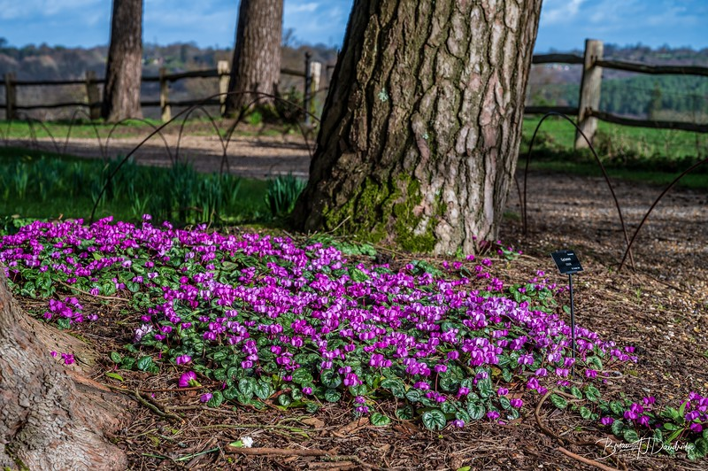 Nymans Gardens-0366.jpg