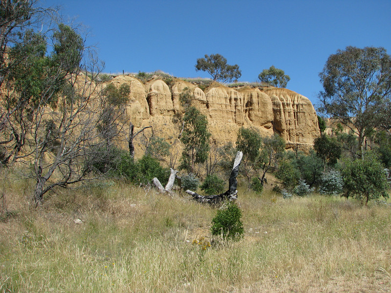Omeo - Oriental Claims