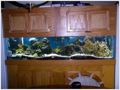 My 100 Gal Reef