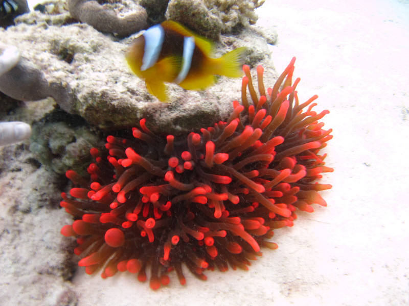 Come on then....  Special (there are loads of them) red anemone