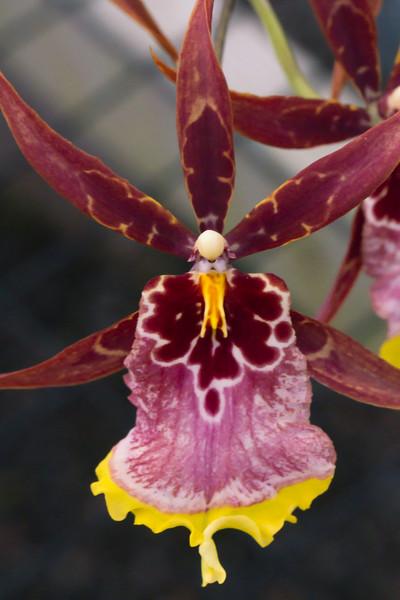 Orchid Farm - Ian 025.1.jpg