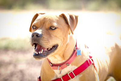 Vicktory Dog Meryl