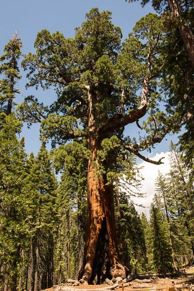 2019 San Francisco Yosemite Vacation 047 - Mariposa Grove.jpg