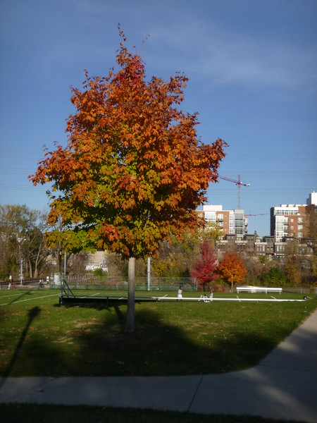 Minneapolis: October 24, 2016 (2:30pm)