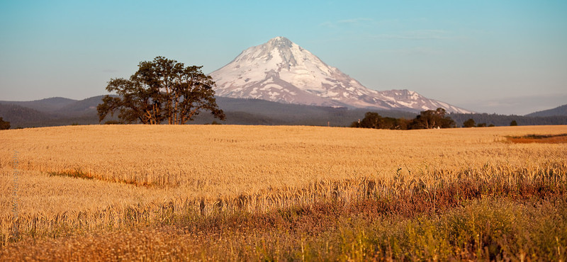 0709_Oregon-10.jpg