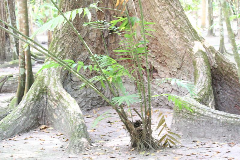 Guatemala Tikal 0 129.JPG