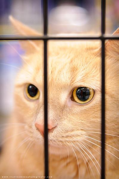 20110611 PetSmart Adoption Event-8.jpg