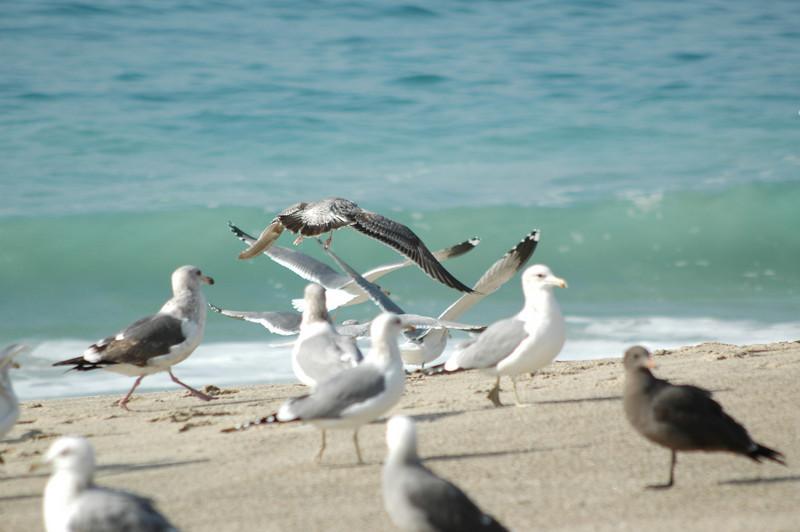 gulls (13).JPG
