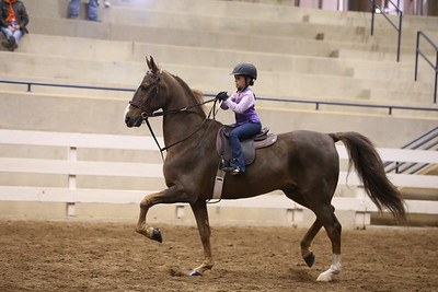 65A. Academy Equitation  WT 10  & Under intermediate