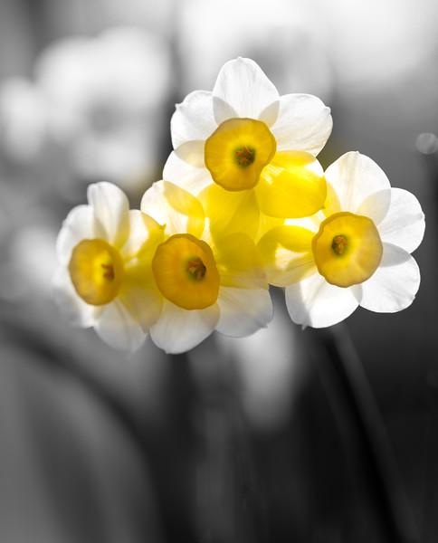 flower1 selective colour.jpg
