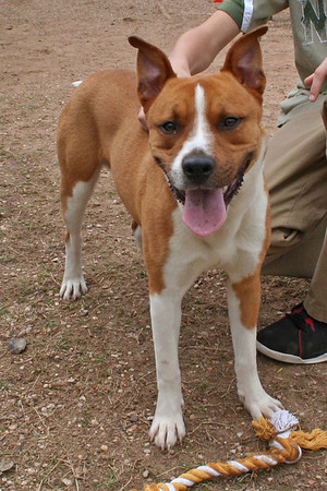 Terrence A499256 — ADOPTED