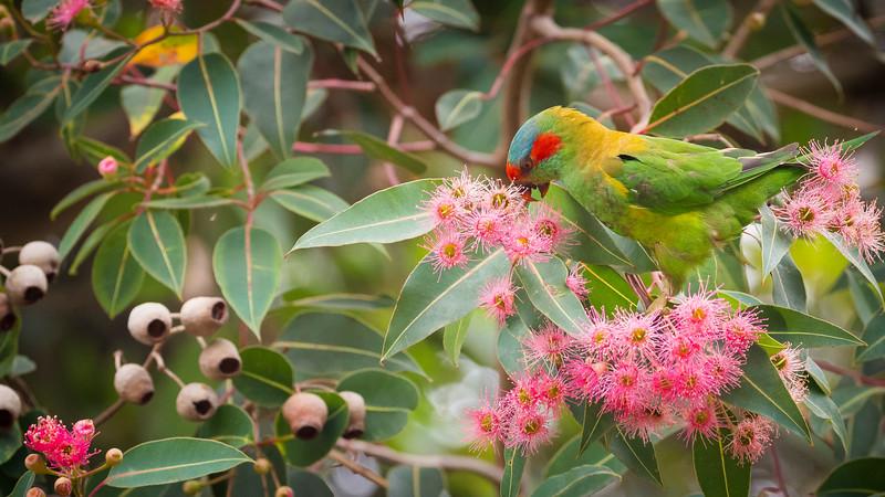 012019  birds  .JPG
