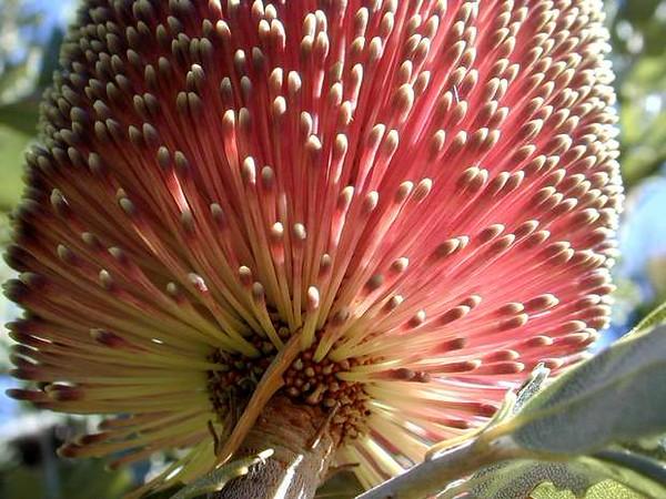 620_flower_Dscn8396.jpg
