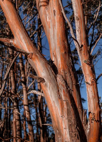 Tasmania_2015_161-Edit.jpg