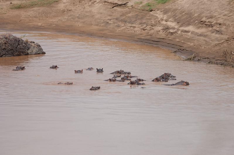 Flodhest, Oliphant River, Kruger National Park