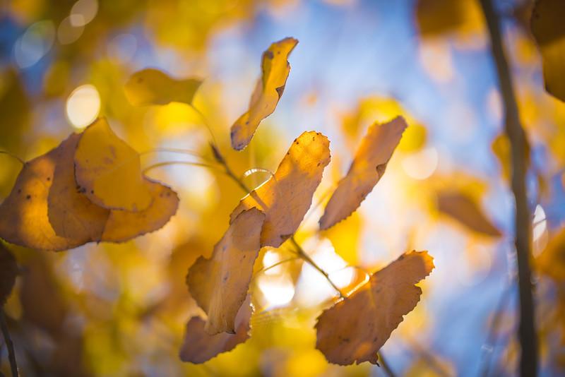 20151024-Fall Colors-104.jpg