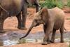 A young elephant enjoying life